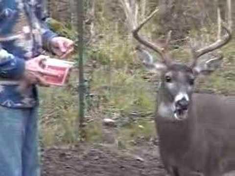 Feeding Deer Friends