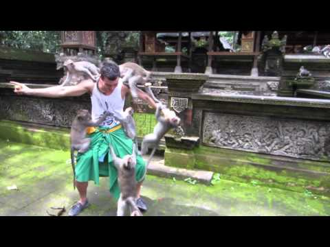 Monkeys attack tourist in Ubud, Bali