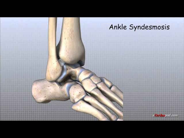 Ankle Anatomy Animated Tutorial