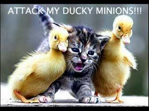 Funny Cats - Random Photo (28786651) - Fanpop