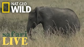 Safari Live - Day 37 | Nat Geo WILD