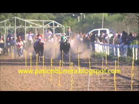 Picante, Pampa del Indio (08-06-14)
