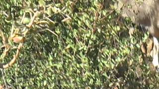 More Short Movies of Botswana Safaria