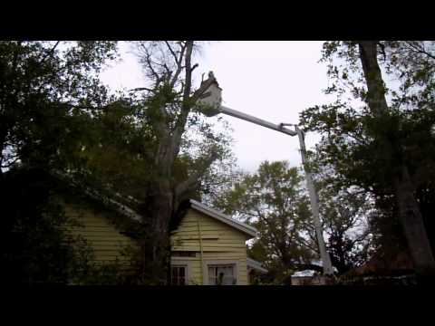 Aerial Crane Hazardous Tree Removal, Bay St. Louis, Mississippi