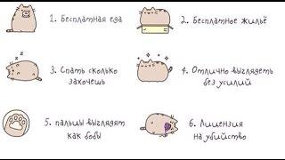 6 причин чтобы быть котом картинки