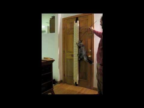 Cats Climbing Door