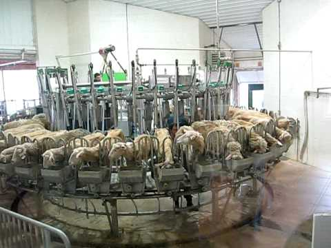 Sheep Milking Machine Music Videos