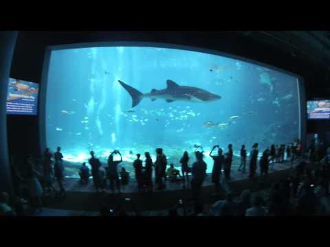 Georgia Aquarium Virtual Tour 1080p HD