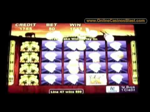 50 lions slot wins
