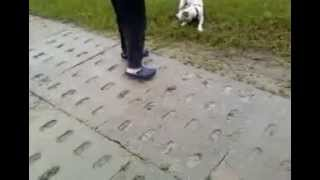 my dog Cody-01 (funny annimals).mp4
