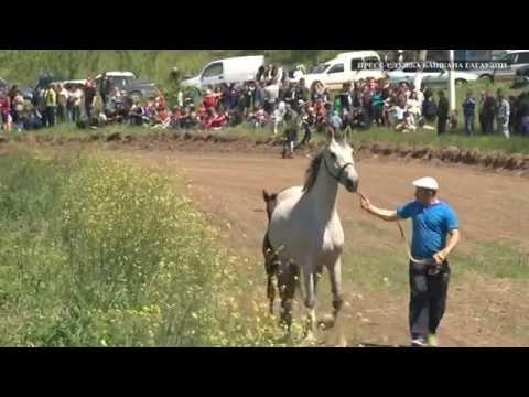 Хедерлез в чадыр Лунге отметили конно спортивными состязаниями