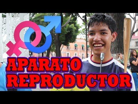 El Aparato Reproductor (Glande) - La Gente Opina | Cobenant Productions