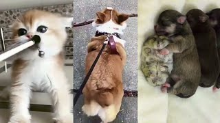 Funny and cute animals videos compilation cute moment of the animals #05