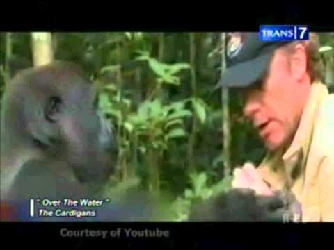 On The Spot 7 Kisah hewan setia pada majikanya
