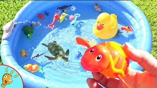 WATER ANIMALS! Education for Kids to Learn Animals and Names with Squishee Nugget