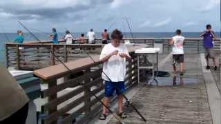 Catching Snook on the Juno Pier, in Juno Beach Florida