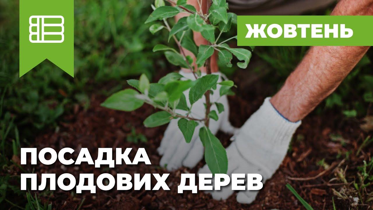 Уход и выращивание яблонь