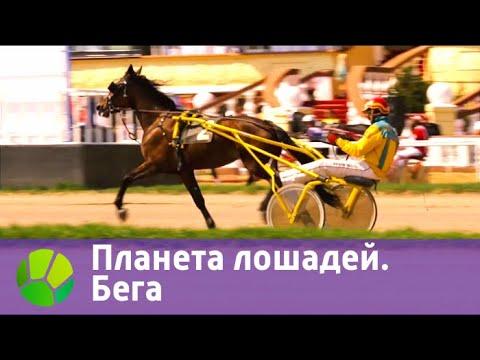 Планета лошадей. Бега  | Живая Планета
