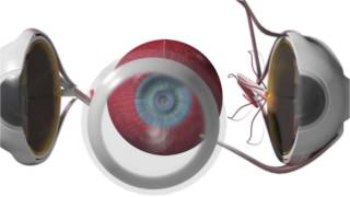 EYE AS AN OPTICAL SYSTEM
