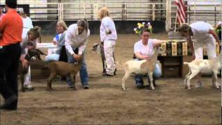 Adalida Wins Jr. Grand Champion LaMancha