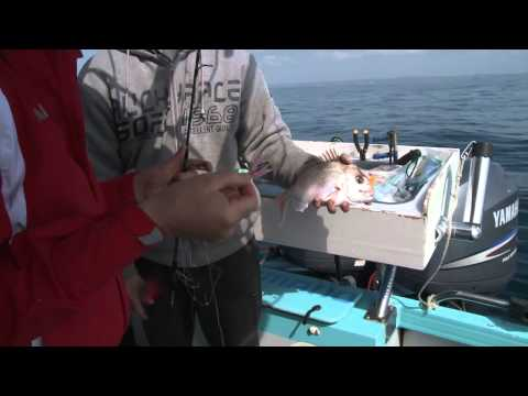 Reef Fishing Pittwater & Sydney