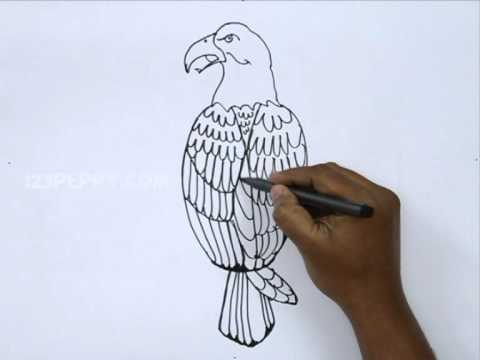 how to draw a eagle step by step youtube