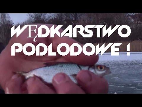 Wędkarstwo Podlodowe - Pierwsze Ryby 2016 ! Płotki Na Spławik !
