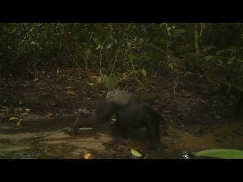 Photo camera traps in Democratic Republic of Congo