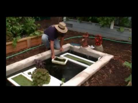 Growing Organic Duckweed On Floating Raft For Aquaponics In Same Pond Or Tank As Your Tilapia