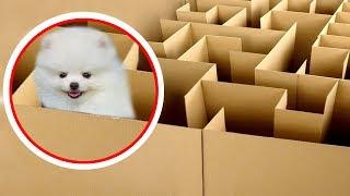 NTN - Cún Con Thử Thách Thoát Khỏi Mê Cung (Puppy solving the maze challenge)