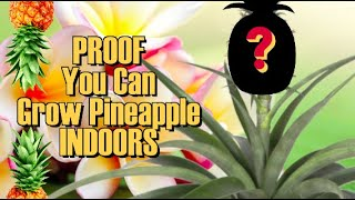 how to grow a pineapple on your first try , proof it works !!!