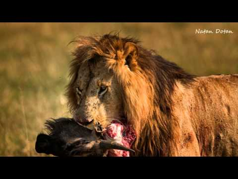 wildlife photography in Action • photography workshops