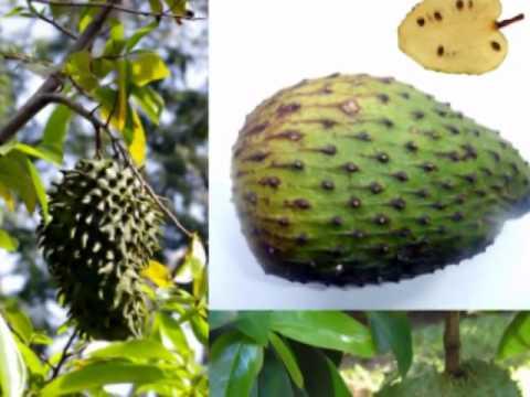 Ученые обнаружили противораковый фрукт
