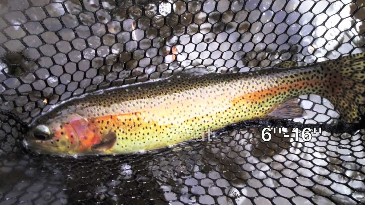 Fly fishing clear creek golden colorado river info youtube for Colorado out of state fishing license