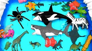 Learn Sea Animal and Wild Zoo Animals Names Learn Colors For Kids Toys