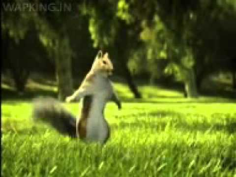 Nestle Kit Kat India Squirrel Break Banta Hai video