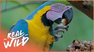 Creatures Of The Magic Water [Amazon Wildlife Documentary] | Wild Things