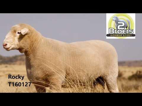 2 Broers Dormer Stoet - Uitnodiging na Nasionale Veiling 9 Sep 2017 MP3