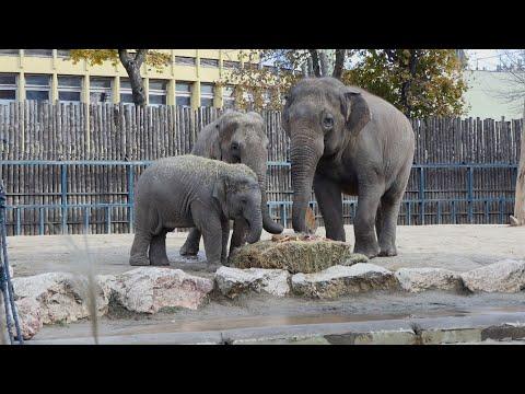 Az elefánt születésnapja