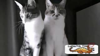 Video Divertenti - Scherzi Divertentissimi Cadute E Incidenti  #39