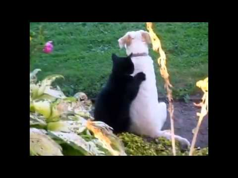 Stupid Cats Doing Stupid Things Funny