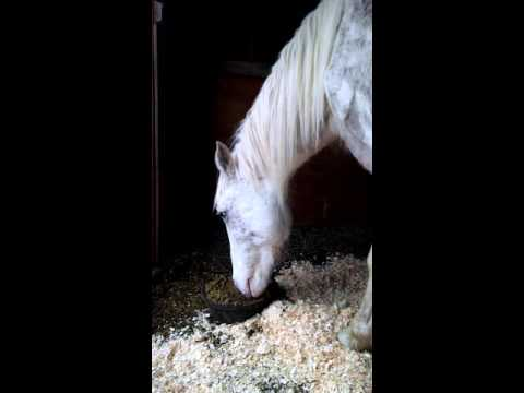 Amineh saved from the Sugarcreek Livestock Auction by Peaceful Acres Horses