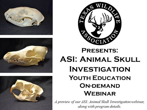 ASI: Animal Skull Investigation On-demand Youth Webinar preview