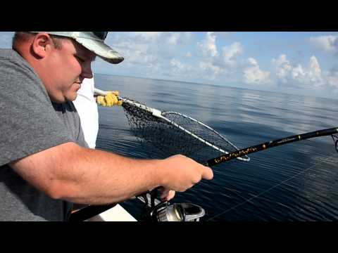 How to catch A Big Cobia While Fishing in Orange Beach Al