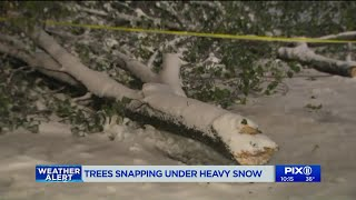 Trees snapping all over tri-state under heavy snow
