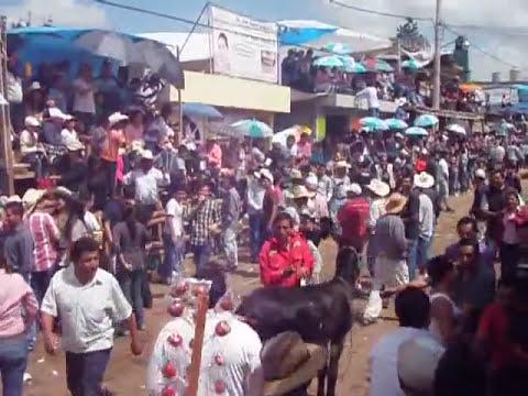 carrera de burros burro caliente pamplonada santiago 2011
