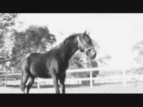 Thoroughbred for adoption cinema starml in wovynivugothub thoroughbred for adoption cinema starml in wovynivugothub source code search engine fandeluxe Gallery
