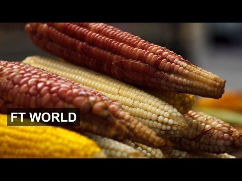 Mexico's treasured crop under threat | FT World