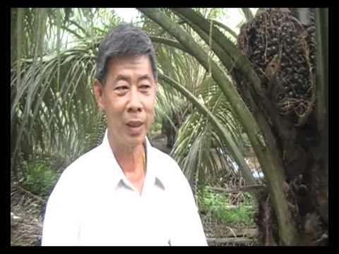 Bio Fertilizer for Oil Palm in Yong Peng Malaysia