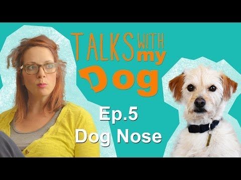 Dog Nose - Talks With My Dog: Ep 5
